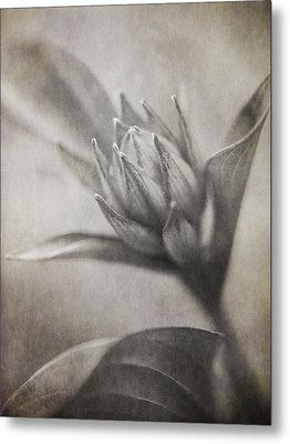 Mystic Anticipation Metal Print by Dale Kincaid