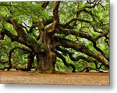 Mystical Angel Oak Tree Metal Print