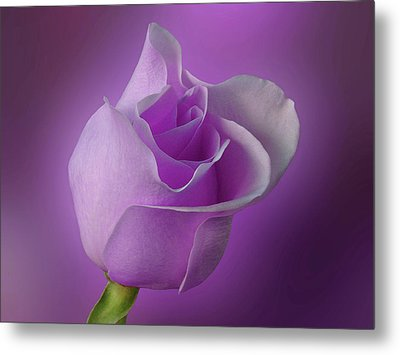 Mystical Purple Rose Metal Print by Sandy Keeton
