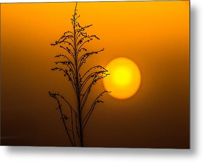 Mystical Sunset Metal Print by Shelby  Young