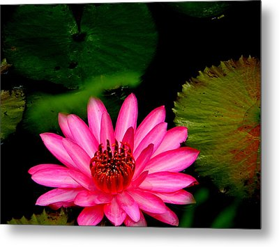 Mystical Water Lilly Metal Print