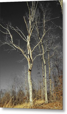 Metal Print featuring the photograph Naked Branches by Linda Segerson