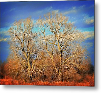 Naked Branches Metal Print by Marty Koch