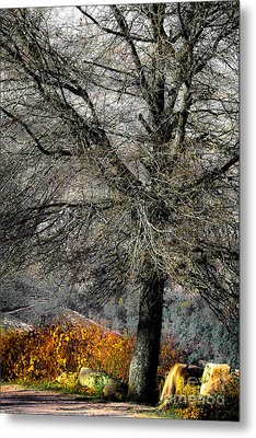 Naked For The Winter Metal Print by Edgar Laureano