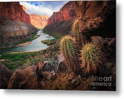 Nankoweap Cactus Metal Print by Inge Johnsson