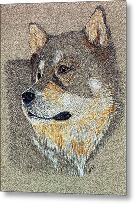 Metal Print featuring the drawing Nanook by Stephanie Grant