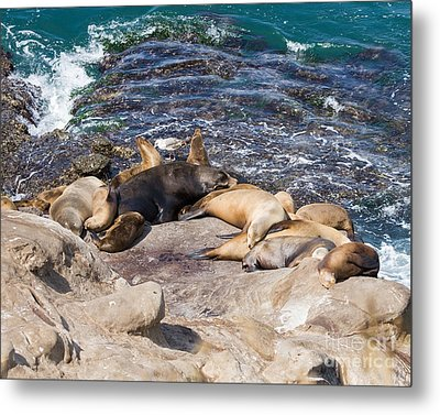 Nap Time Metal Print by Dale Nelson