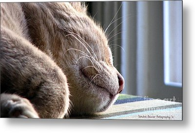 Metal Print featuring the photograph Nap Time by Sandra Bauser Digital Art