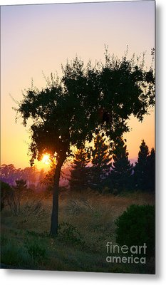 Metal Print featuring the photograph Napa Moment by Ellen Cotton