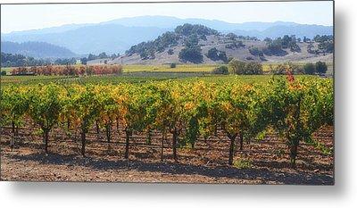 Napa Valley California Vineyard In Fall Autumn Metal Print