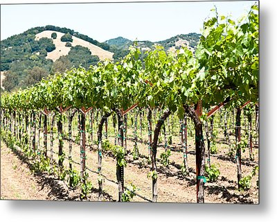 Metal Print featuring the photograph Napa Vineyard Grapes by Shane Kelly