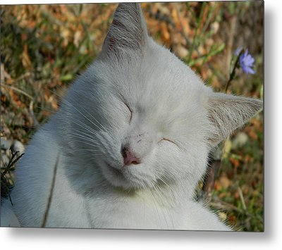Metal Print featuring the photograph Napping Barn Cat by Kathy Barney