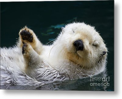 Napping On The Water Metal Print by Mike  Dawson