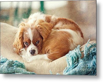 Napping Puppy Metal Print