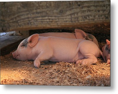 Metal Print featuring the photograph Naptime by Kathleen Scanlan