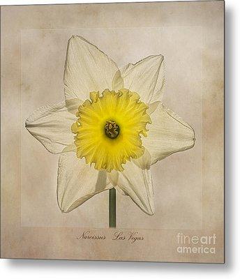 Narcissus Las Vegas Metal Print by John Edwards