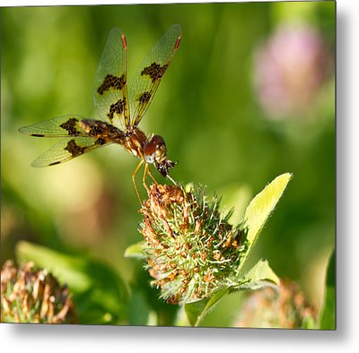 Metal Print featuring the photograph Nashoba Winery Dragonfly by John Hoey