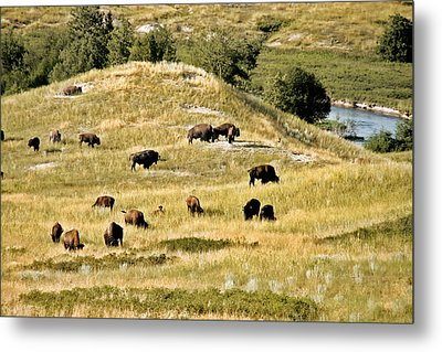 National Bison Range Moiese Mt Metal Print by Christine Till