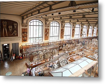 National Museum Of Natural History - Paris France - 011316 Metal Print by DC Photographer