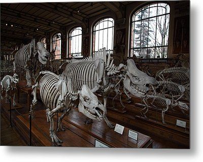 National Museum Of Natural History - Paris France - 01132 Metal Print by DC Photographer