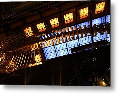 National Museum Of Natural History - Paris France - 011340 Metal Print
