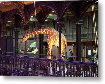 National Museum Of Natural History - Paris France - 011351 Metal Print by DC Photographer