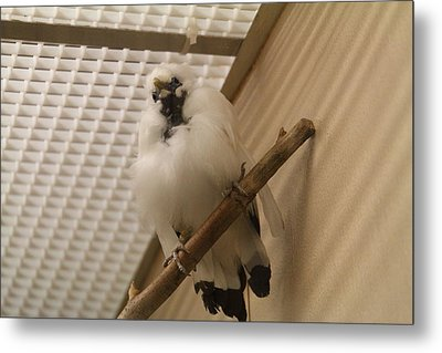 National Zoo - Birds - 01138 Metal Print