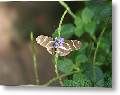 National Zoo - Butterfly - 12122 Metal Print by DC Photographer