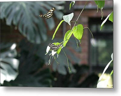 National Zoo - Butterfly - 12123 Metal Print by DC Photographer