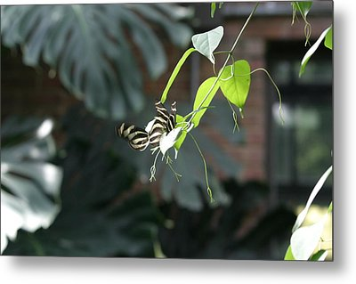 National Zoo - Butterfly - 12125 Metal Print by DC Photographer
