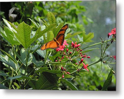 National Zoo - Butterfly - 12126 Metal Print by DC Photographer