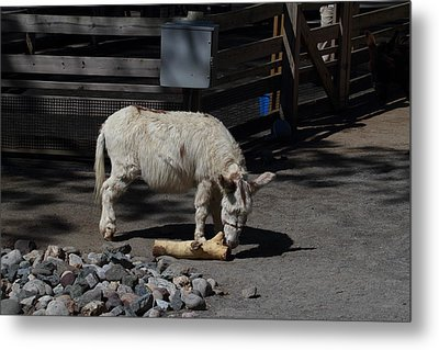 National Zoo - Donkey - 01135 Metal Print by DC Photographer