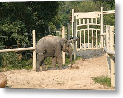 National Zoo - Elephant - 12127 Metal Print by DC Photographer