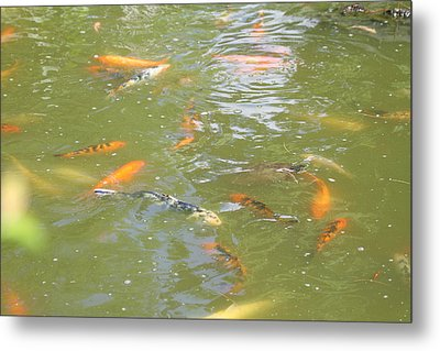 National Zoo - Fish - 011317 Metal Print by DC Photographer