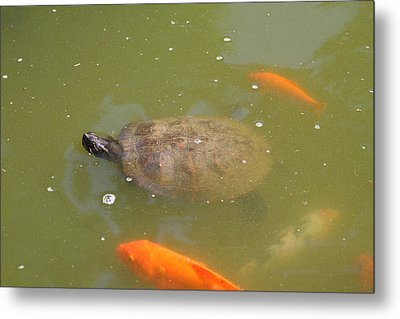 National Zoo - Fish - 011318 Metal Print by DC Photographer