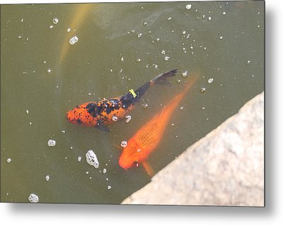 National Zoo - Fish - 01132 Metal Print by DC Photographer