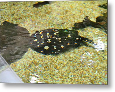 National Zoo - Fish - 01138 Metal Print by DC Photographer