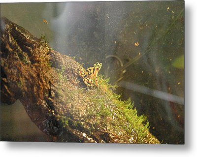 National Zoo - Frog - 12121 Metal Print by DC Photographer