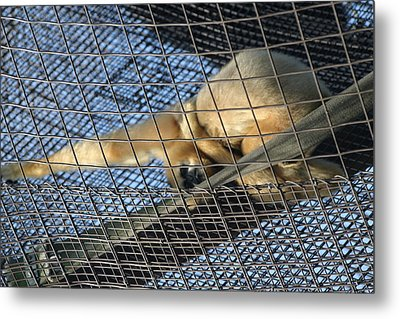 National Zoo - Large Mammal - 12121 Metal Print by DC Photographer
