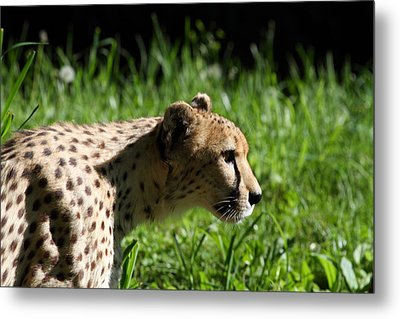 National Zoo - Leopard - 011316 Metal Print by DC Photographer