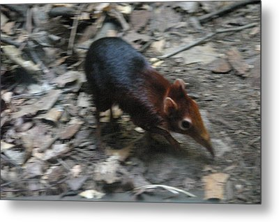National Zoo - Mammal - 121213 Metal Print by DC Photographer