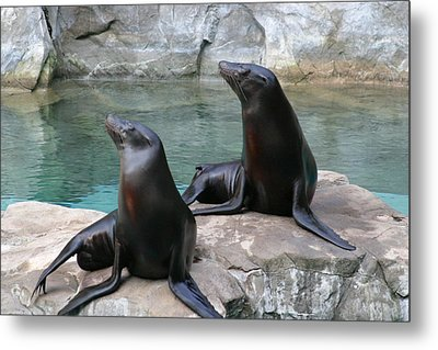National Zoo - Sea Lion - 12123 Metal Print by DC Photographer