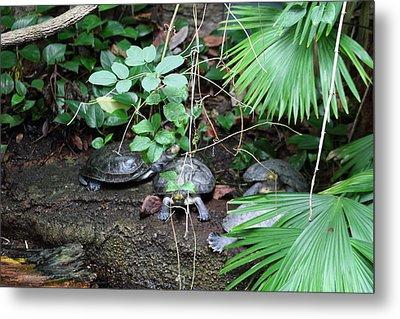 National Zoo - Turtle - 01132 Metal Print