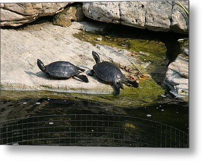 National Zoo - Turtle - 12123 Metal Print by DC Photographer