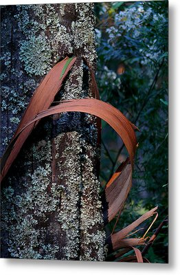 Metal Print featuring the photograph Natural Bands 1 by Evelyn Tambour