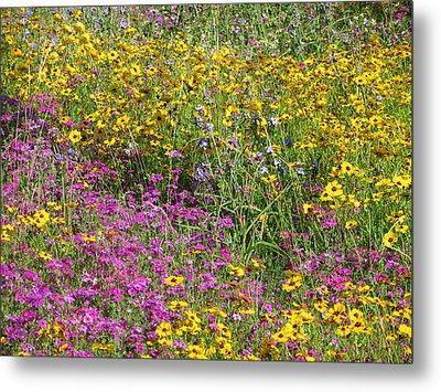 Natural Beauty Metal Print by Tim Townsend