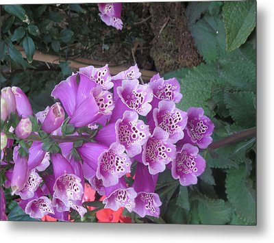 Metal Print featuring the photograph Natural Bouquet Bunch Of Spiritul Purple Flowers by Navin Joshi