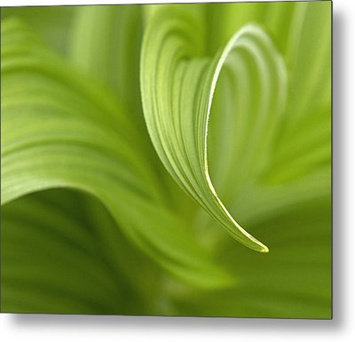 Natural Green Curves Metal Print by Claudio Bacinello