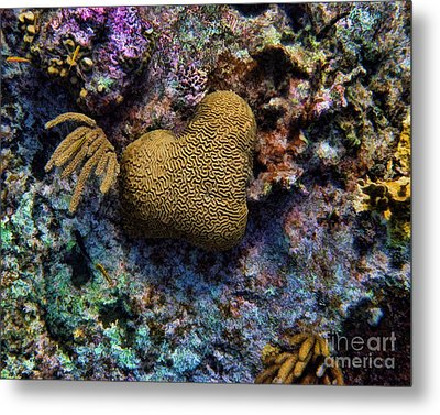 Natural Heart Metal Print by Peggy Hughes