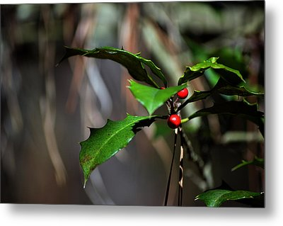 Metal Print featuring the photograph Natural Holly Decor by Bill Swartwout